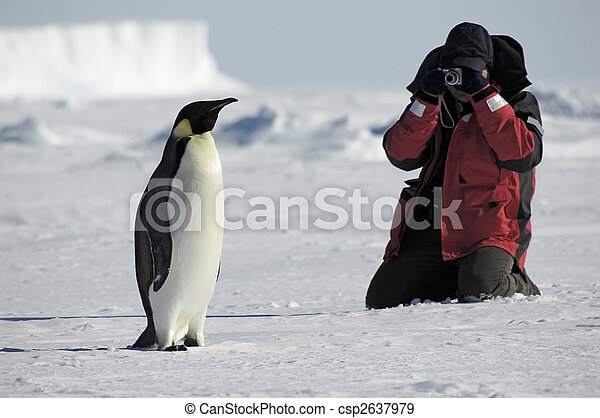 Penguin photos - csp2637979