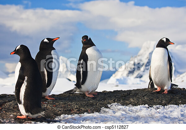 penguins on a rock in antarctica penguins dreaming sitting on a