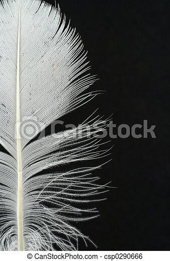 penna, b, dettagli - csp0290666