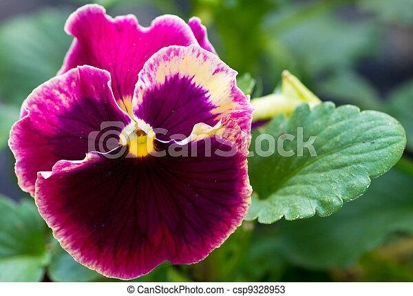 Pensee Fleur Unique Feuilles Pensee Fleur Feuilles Photos