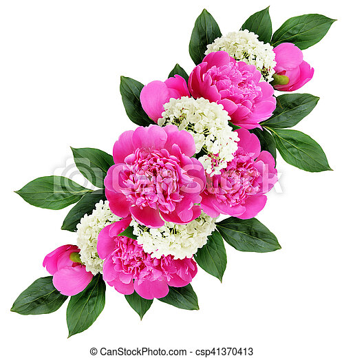 Peonies And Hydrangea Flowers Bouquet Isolated On White