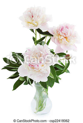 Peonies In A Vase Isolated On White Background Stock Image Search