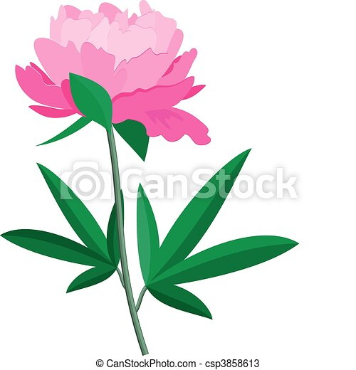vector image of peony over white eps 8 ai jpeg rh canstockphoto com penny vector download pony vector creator