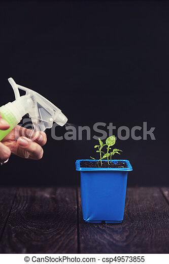Pepper growing in a pot - csp49573855