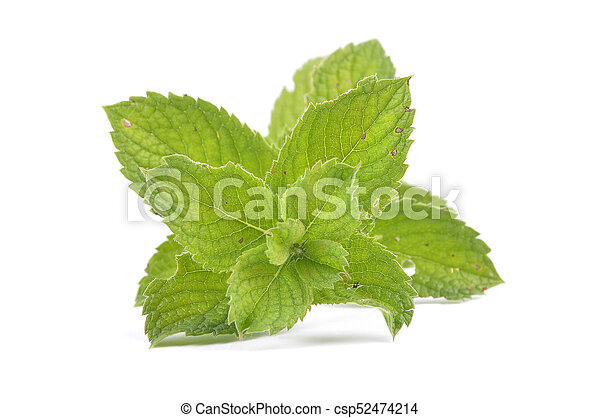 Peppermint on white background - csp52474214