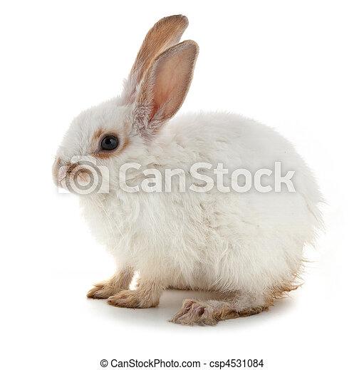 Un conejito blanco - csp4531084