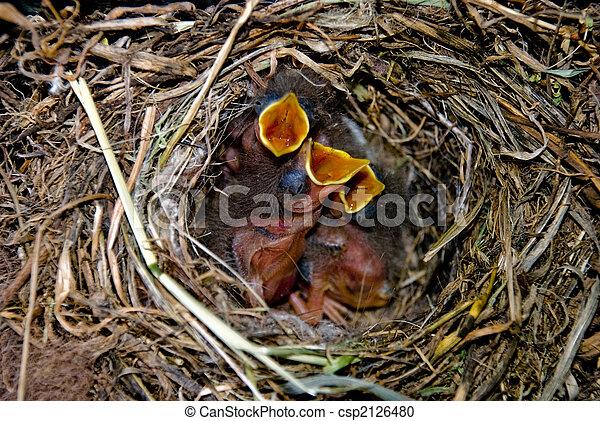Tres pequeñas aves en su nido - csp2126480