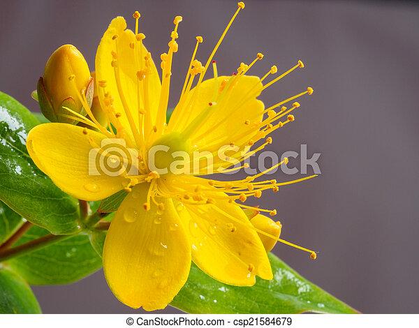 El primer plano de una flor amarilla - csp21584679