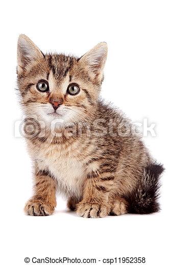 El gatito a rayas se sienta - csp11952358