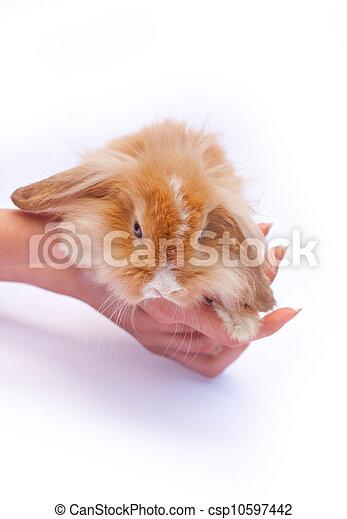 pequeno, coelhos, mãos - csp10597442