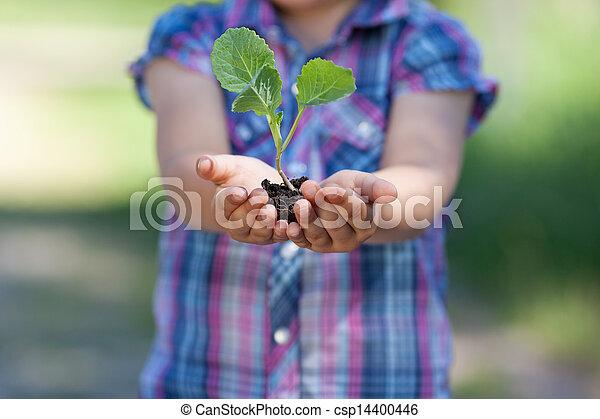 pequeno, planta - csp14400446