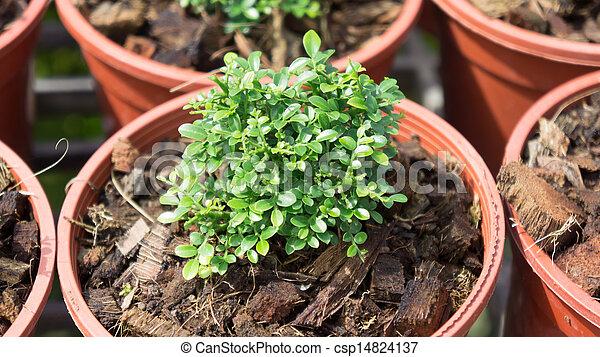 pequeno, planta - csp14824137