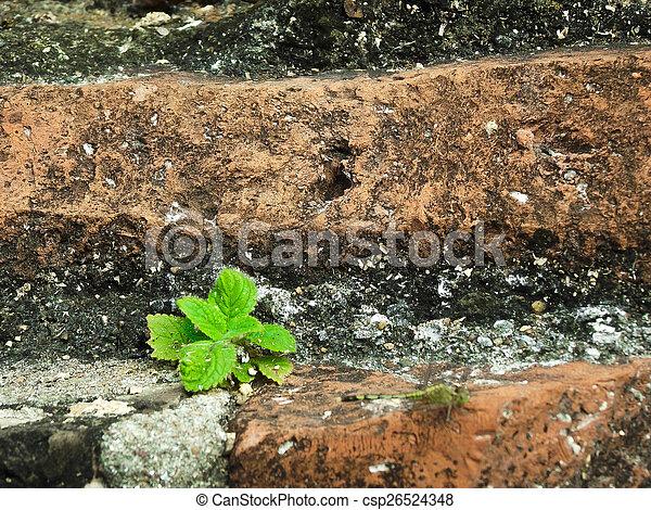 pequeno, planta - csp26524348