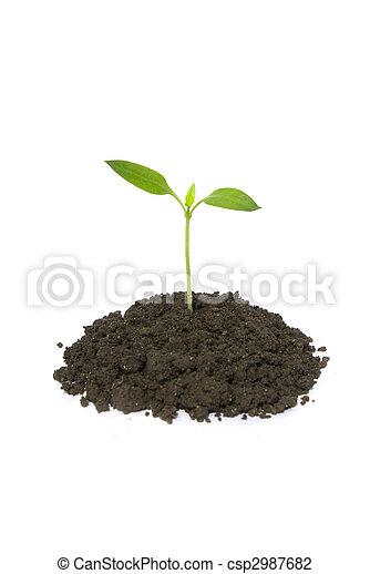 pequeno, planta - csp2987682
