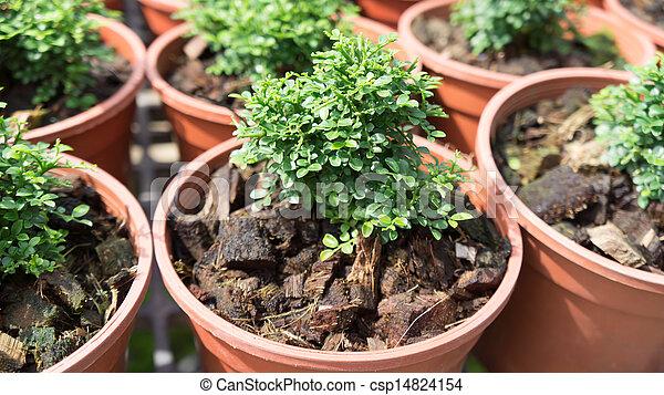 pequeno, planta, crescer - csp14824154
