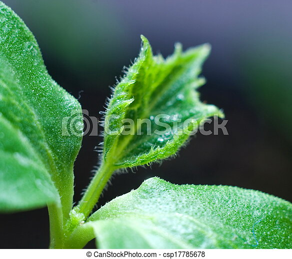 pequeno, planta - csp17785678