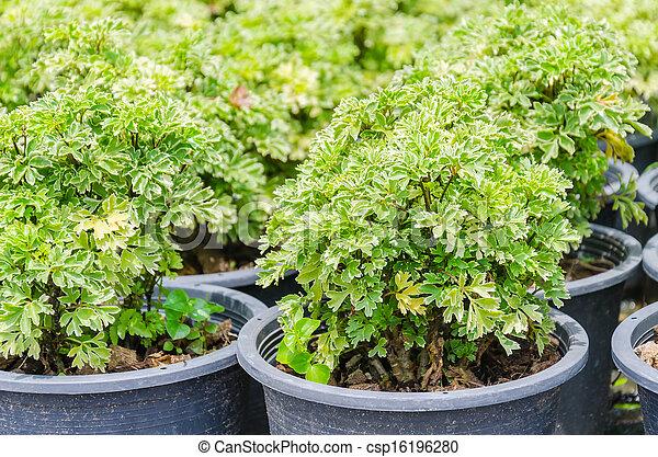 pequeno, planta - csp16196280