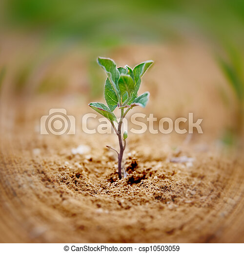 pequeno, planta verde - csp10503059