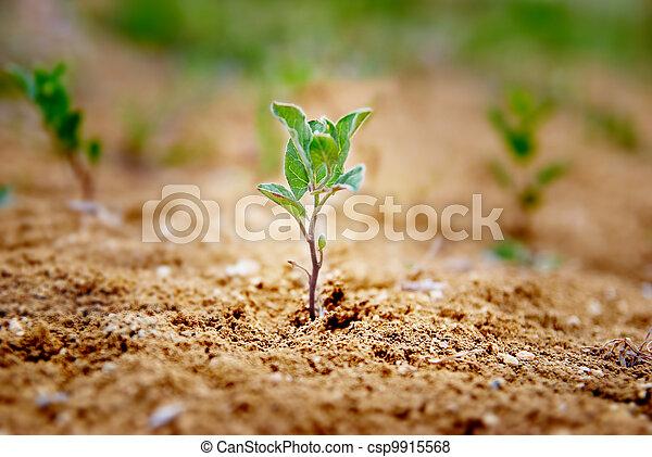 pequeno, planta verde - csp9915568