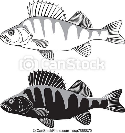 Perch - illustration of freshwater  - csp7868870