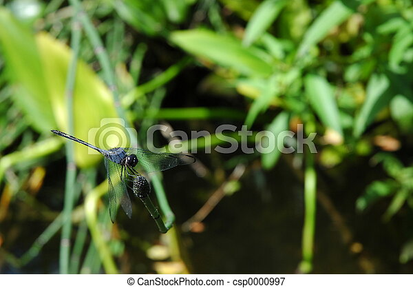 perching dragonfly - csp0000997