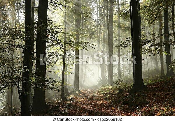percorso, nebbia, foresta - csp22659182