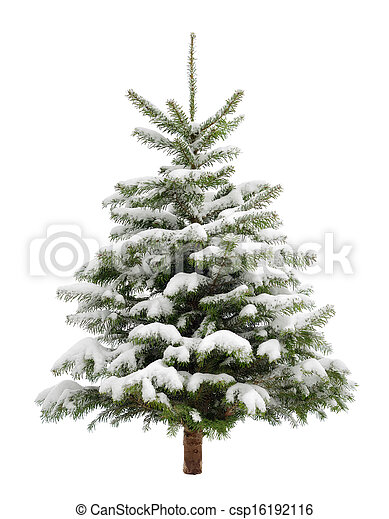 Perfect little Christmas tree in snow - csp16192116