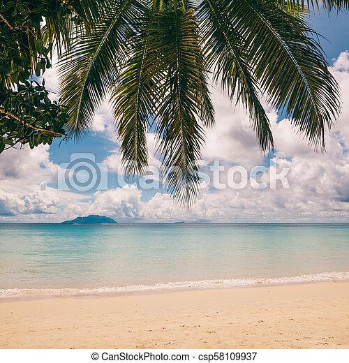 perfetto, spiaggia., isola, vacanza, tropicale, fondo. - csp58109937