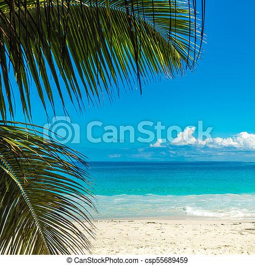 perfetto, spiaggia., isola, vacanza, tropicale, fondo. - csp55689459