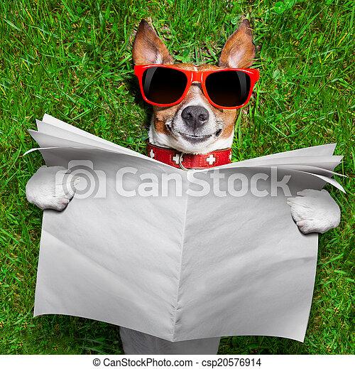 periódico, lectura, perro - csp20576914