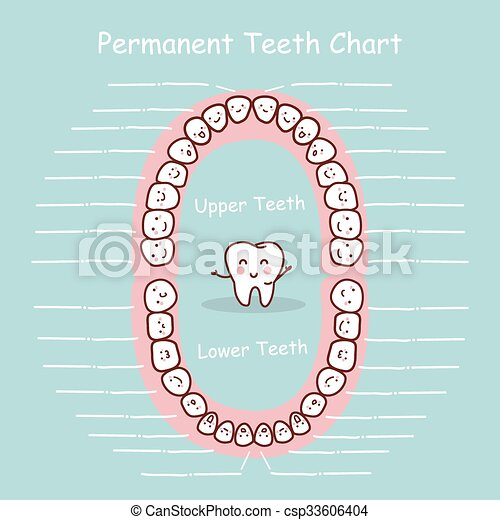 Permanent Tooth Chart Record Great For Health Dental Care Concept