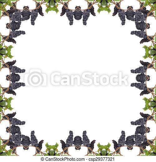 La uva con hojas aisladas en el fondo blanco - csp29377321
