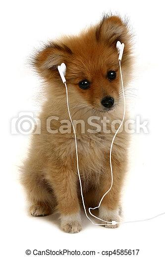 Puppy con auriculares MP3 - csp4585617