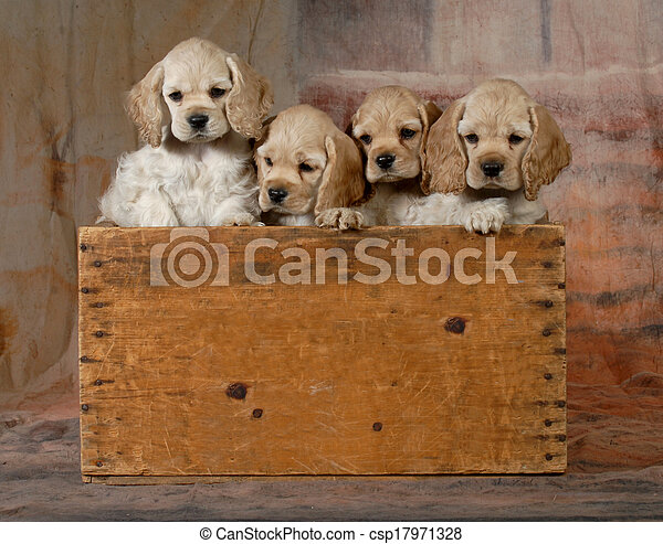 Literatura de cachorros - csp17971328