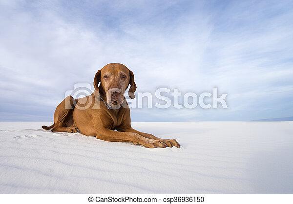 Perro en arena blanca - csp36936150