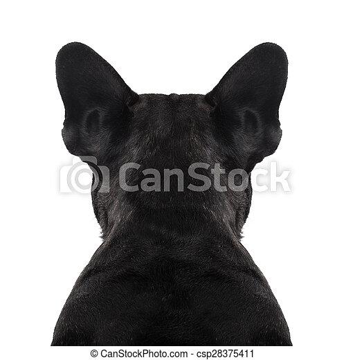 El torso de espalda de perro - csp28375411