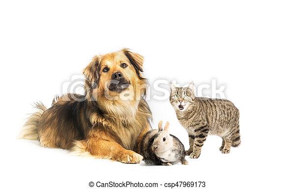 Perro, gato y conejo en el estudio con antecedentes blancos - csp47969173