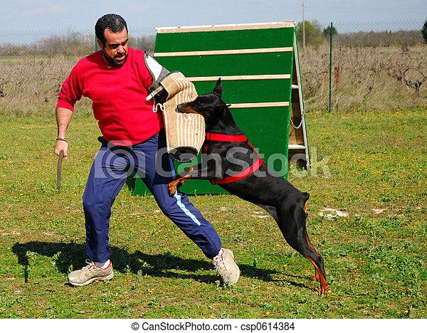 Perro policía - csp0614384