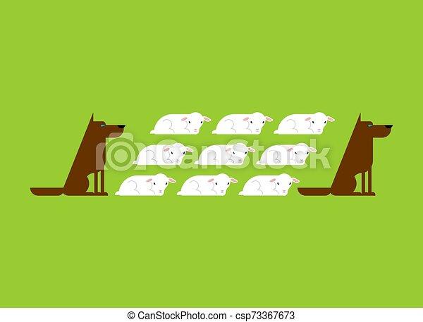 Perro guarda rebaño de ovejas. Perros y corderos - csp73367673