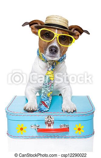 Perro turista de vacaciones - csp12290022