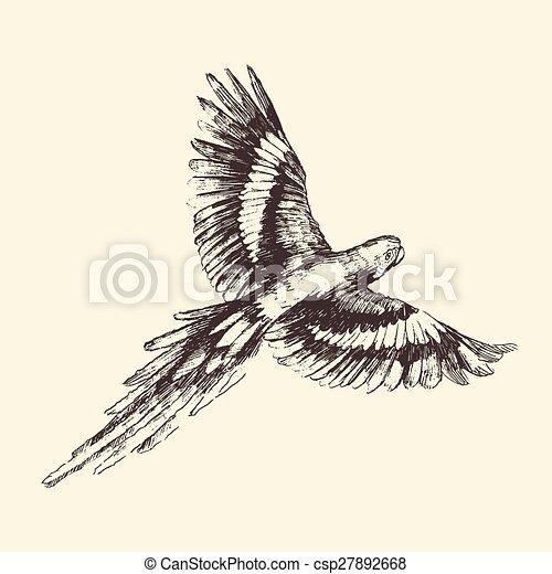 perroquet, illustration, vendange, main, dessiné, gravé - csp27892668