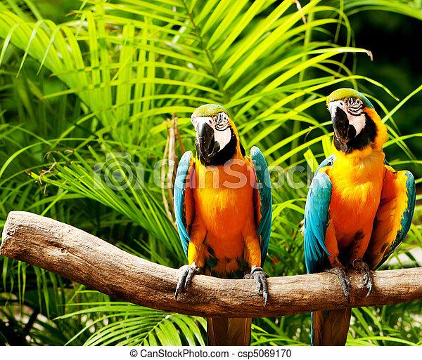 perroquet, séance, oiseau, perche, coloré - csp5069170