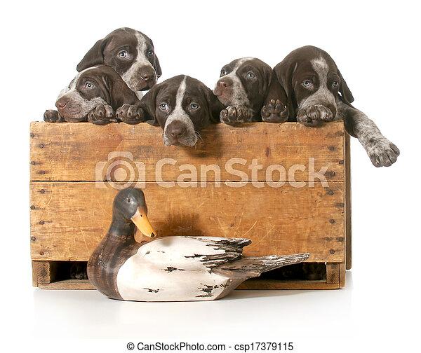 Perros de caza - csp17379115