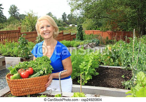 personne agee, jardinier, vegetables. - csp24920804