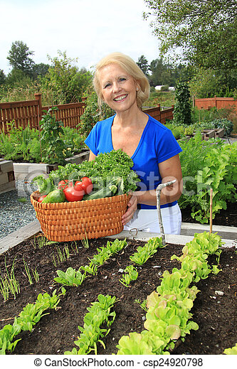 personne agee, vegetables., jardinier - csp24920798
