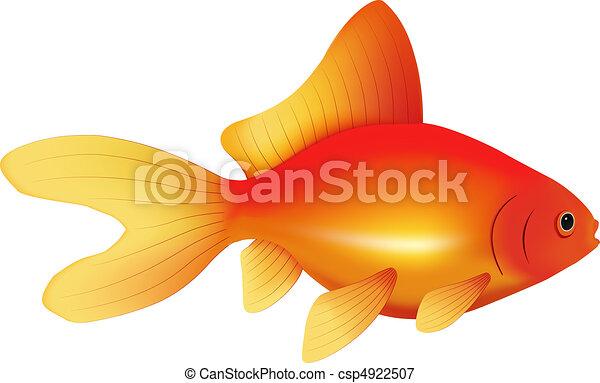 Pesce Rosso Ordinario Tipo Immagine Isolato Realistico