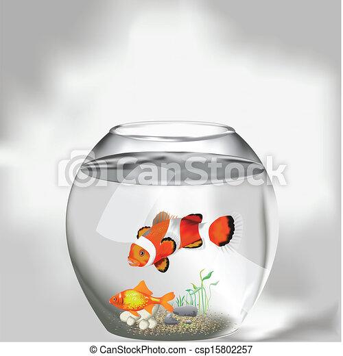 pesci, acquario, due - csp15802257