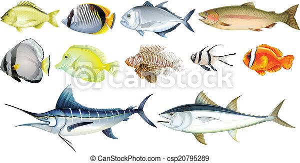 Pesci differente sfondo bianco illustrazione for Sfondo animato pesci