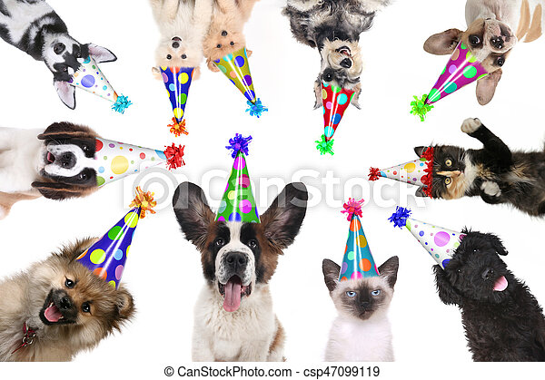 Pet Animals Isolated Wearing Birthday Hats for a Party - csp47099119