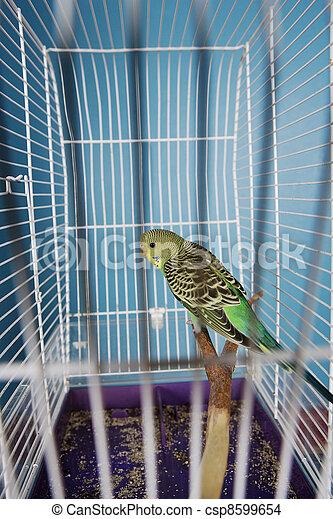 Pet Bird - csp8599654